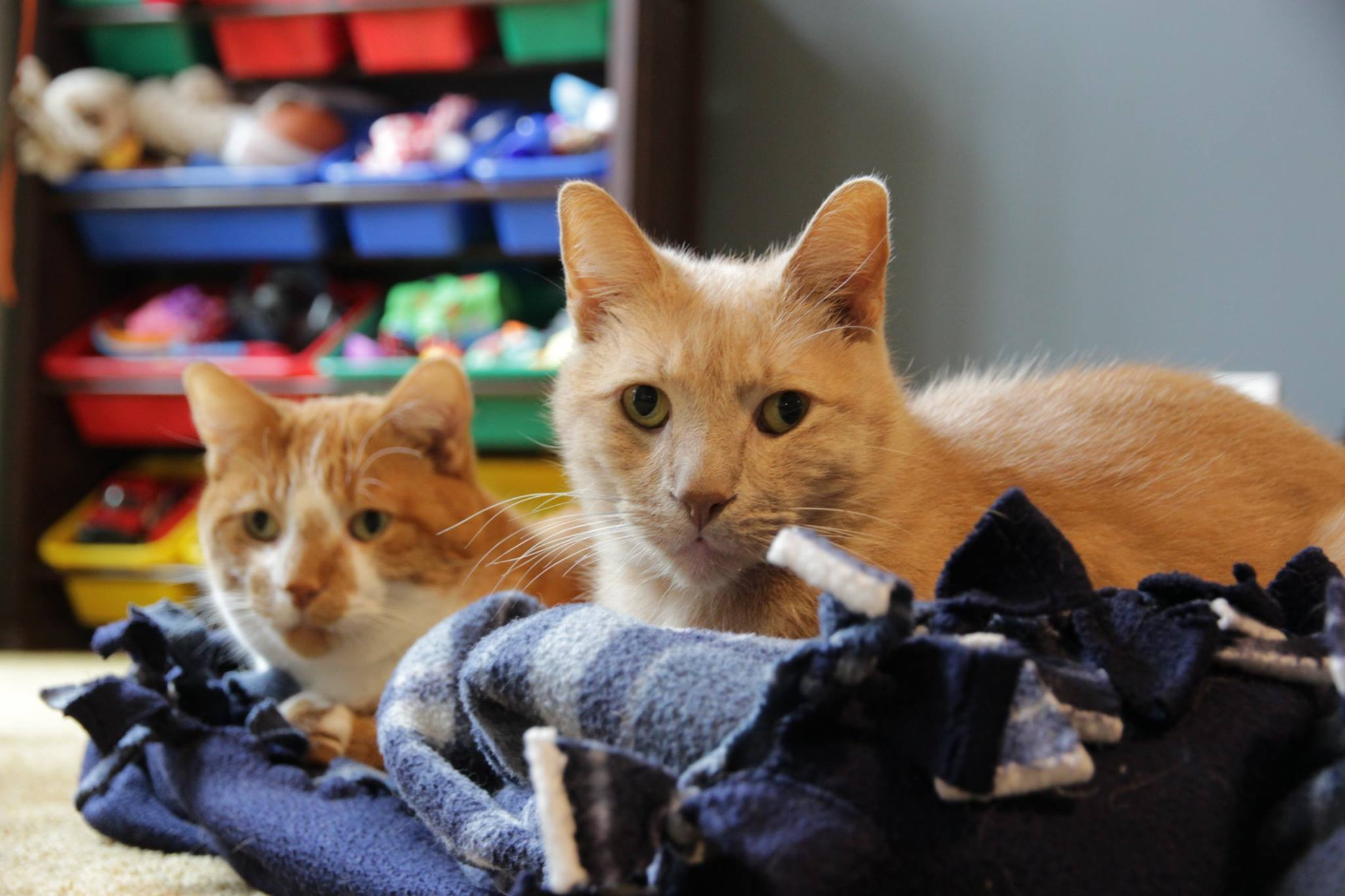 My two cats on a blanket, Leo foreground, Buck background
